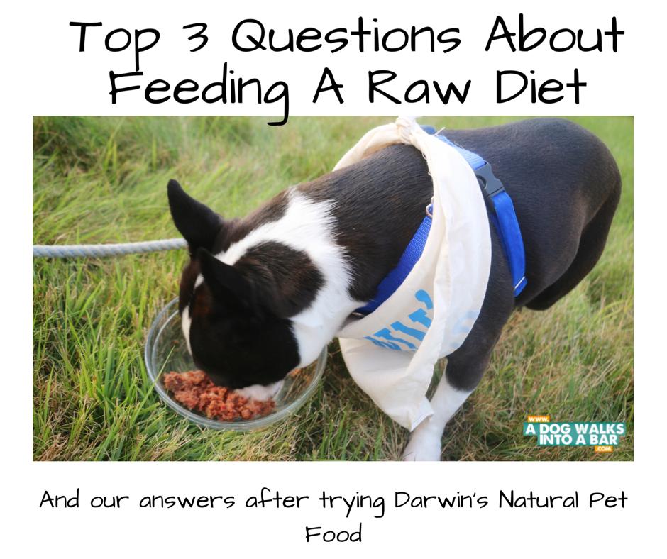 Yoda eating Darwin's Pet Food while in our backyard