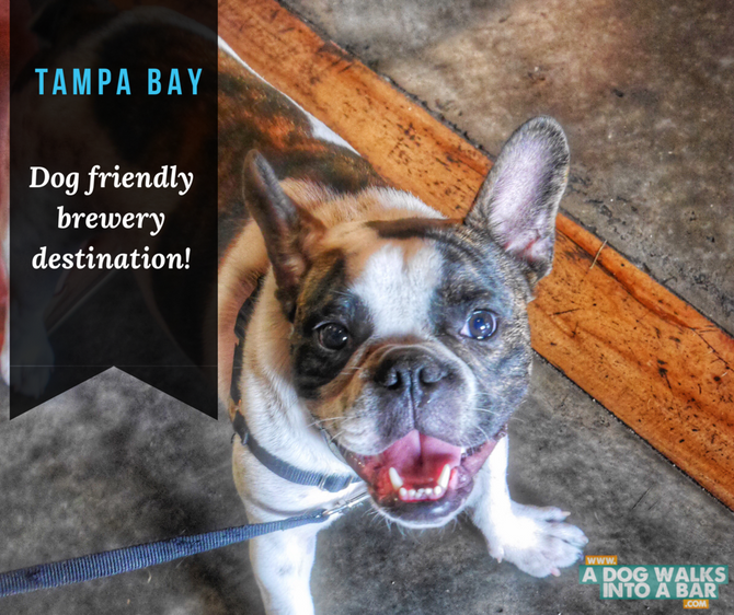 Tampa Bay - Dog Friendly Brewery Mecca