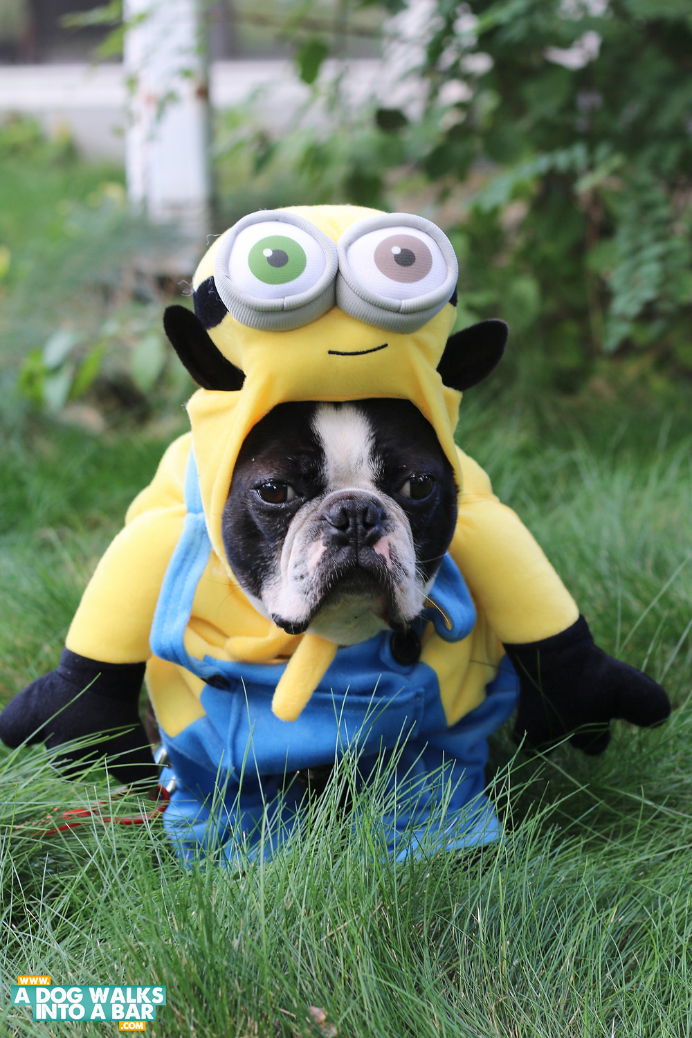 minion dog costume