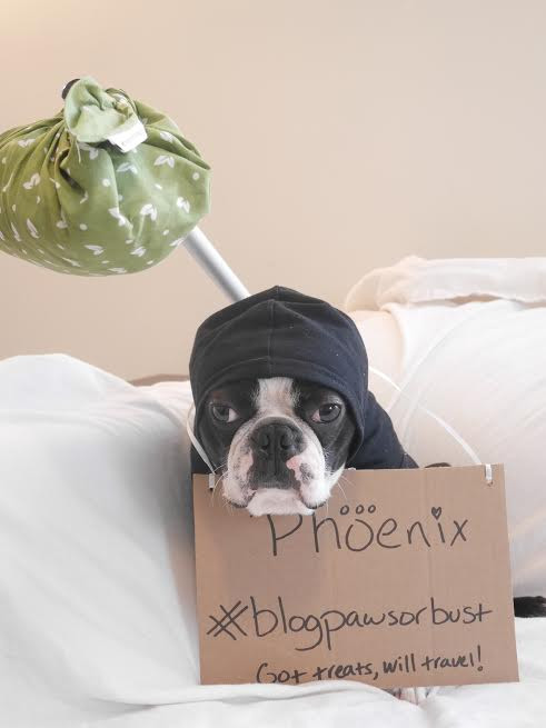Yoda's interpretation of BlogPaws or Bust