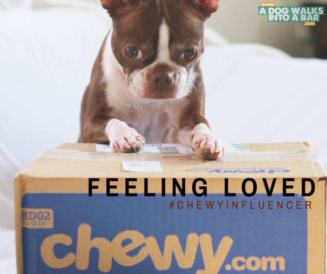 Feeling Loved Because of Chewy #ChewyInfluencer