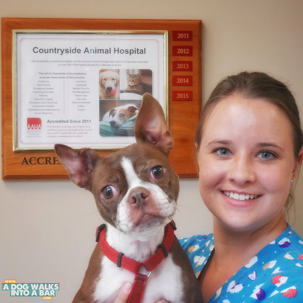 The lovely Vet Tech at our local animal hospital kindly takes her photo with Bean in front of the AAHA plackard