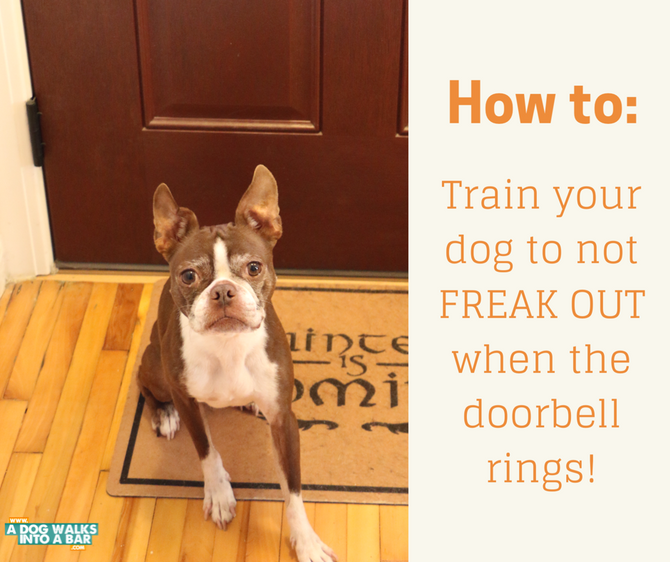 How to Train Your Dog to not Freak Out When the Bell Rings and also WIN prizes