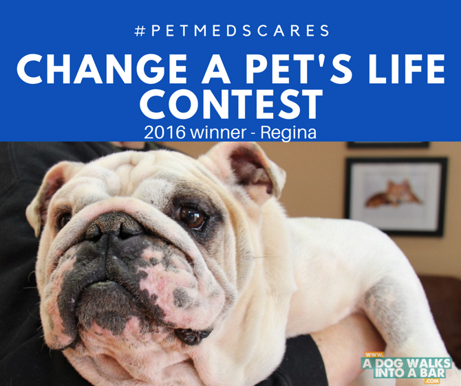 Change a Pet's Life Contest from PetMeds Cares