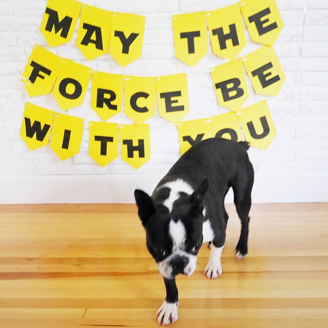 Yoda's welcome home banner before he tried to eat it