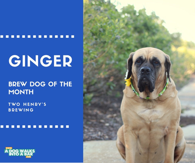 April Brew Dog of the Month - Ginger from Two Henry's Brewing