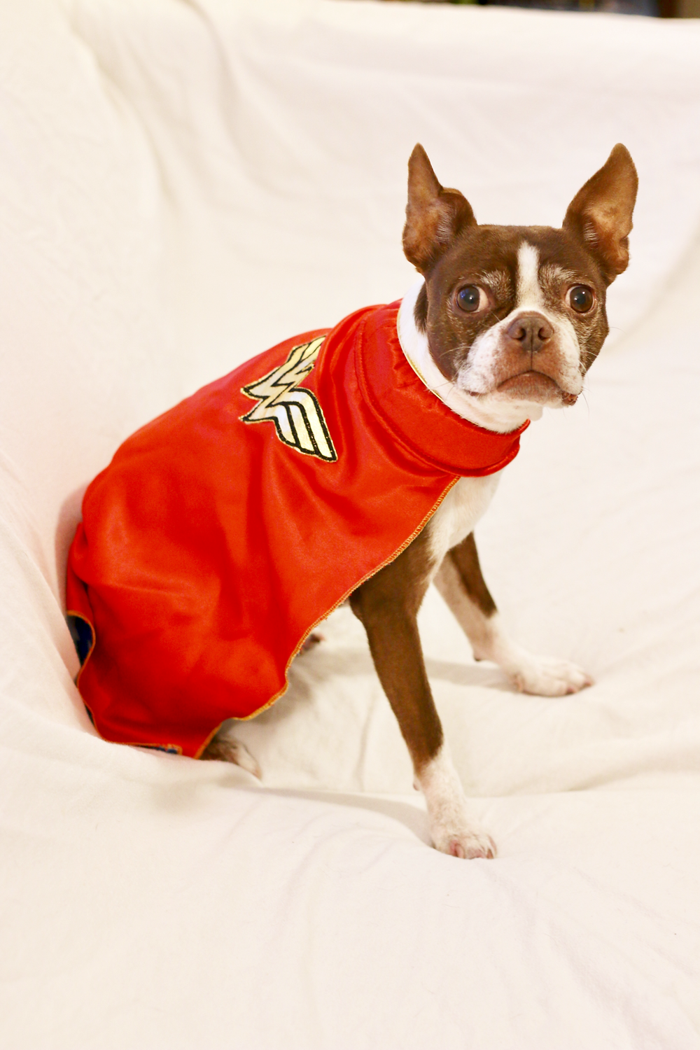 wonder woman dog cape