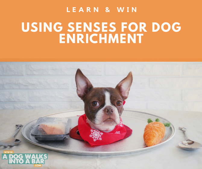 WIN Puzzles and LEARN About Enrichment for Dogs