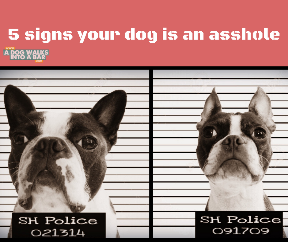 five signs your dog is an asshole