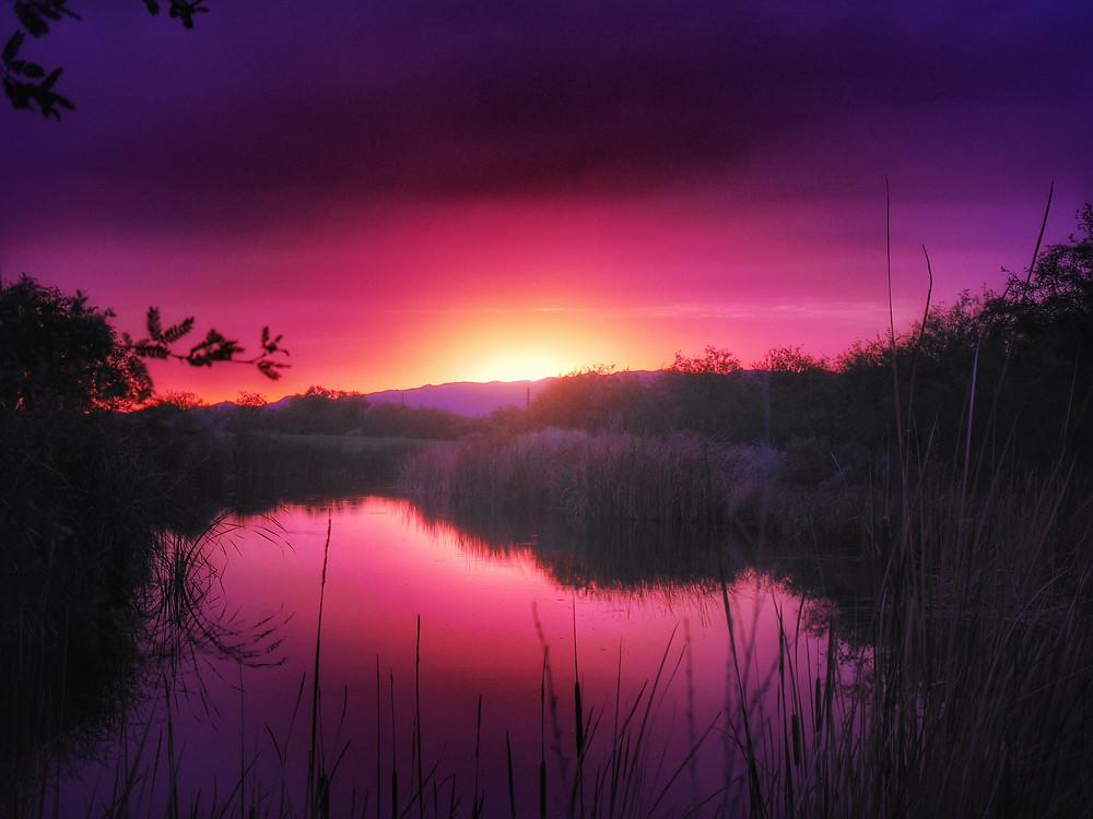 Phoenix Sunset at BlogPaws
