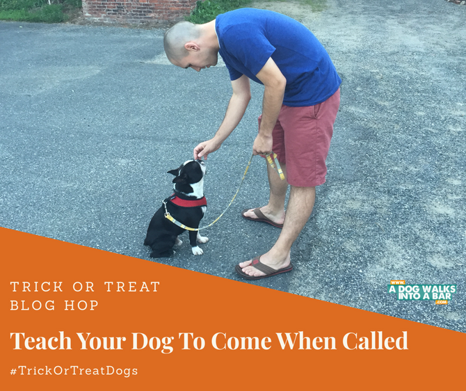 Steps to Teach Your Dog How to Come When Called and Win Prizes