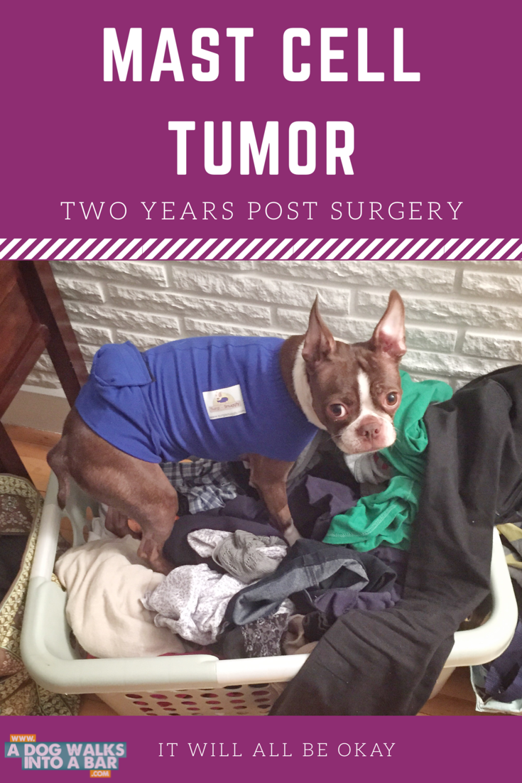 mast cell tumor two years post surgery
