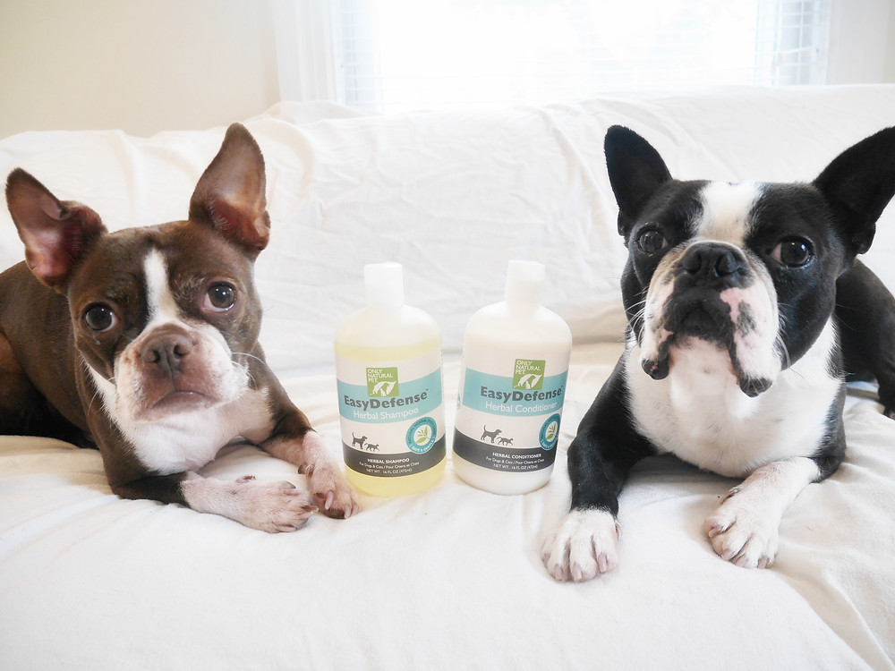 Bean and Yoda with Only Natural Pet EasyDefense Shampoo and Conditioner