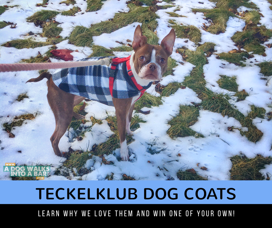 Bean enjoying her Teckelklub Fuzzie Fleece Dog Coat