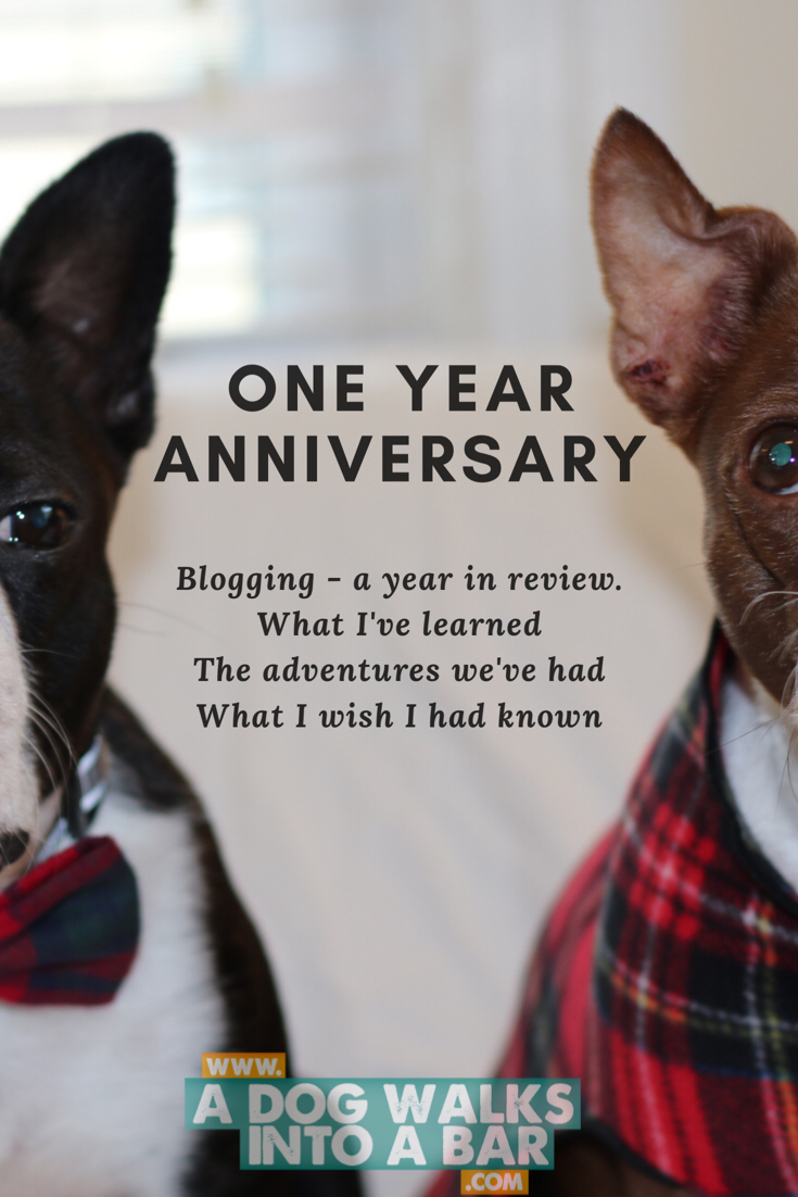 One year blogging anniversary, what we've learned
