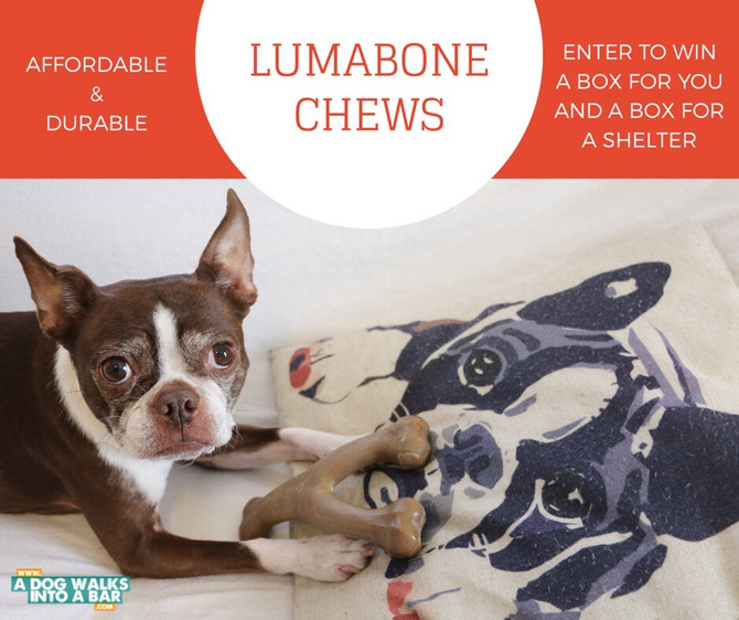 Finding an Affordable and Durable Dog Chew