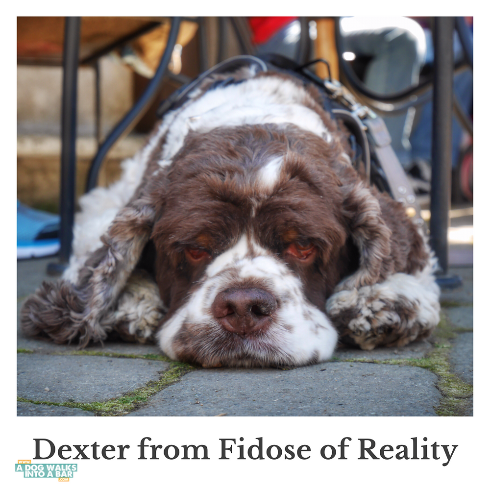 Dexter from Fidose of Reality