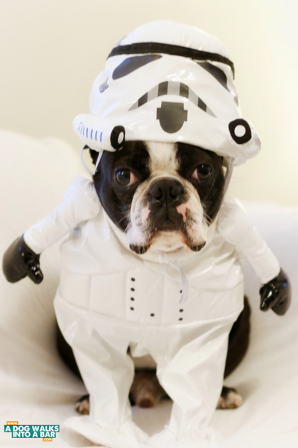 storm trooper dog costume