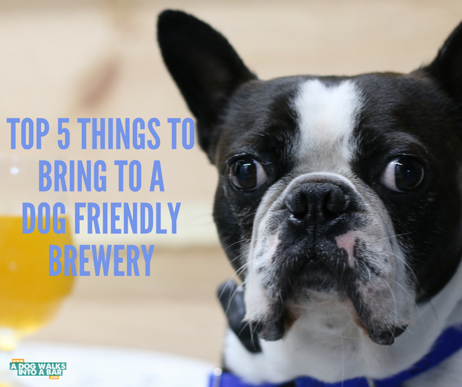 The Top 5 Things to Bring to a Dog Friendly Brewery (Besides Your Dog)