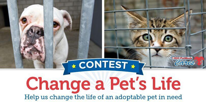 1-800-PetMeds Cares Change a Pet's Life contest