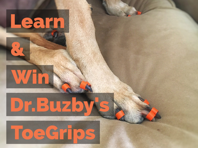 "Help Senior Dogs Get a ""Grip"" with Dr.Buzby's #ToeGrips - GIVEAWAY"