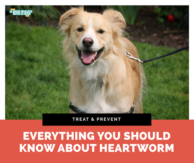 Everything you should know about heartworm