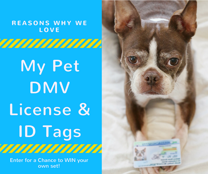 A Review of My Pet DMV & Giveaway