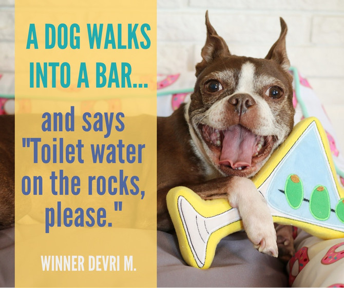 A Dog Walks into a Bar, The Top Punchlines