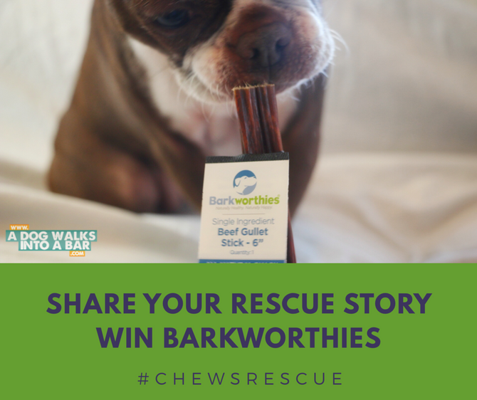 Share your Rescue Story and Win Barkworthies Prizes