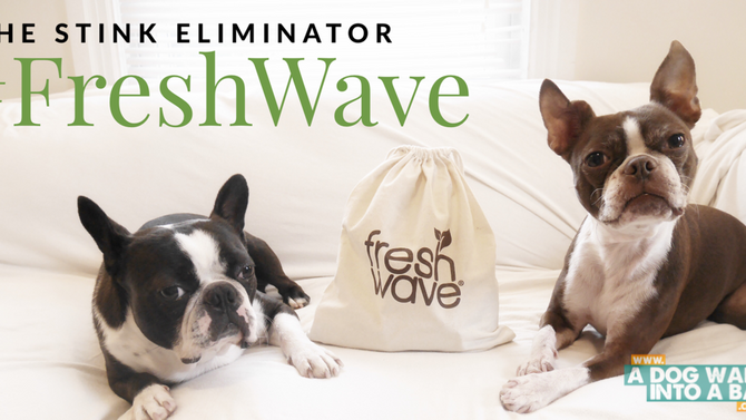 Learn and Win: Fresh Wave, the Stink Eliminator