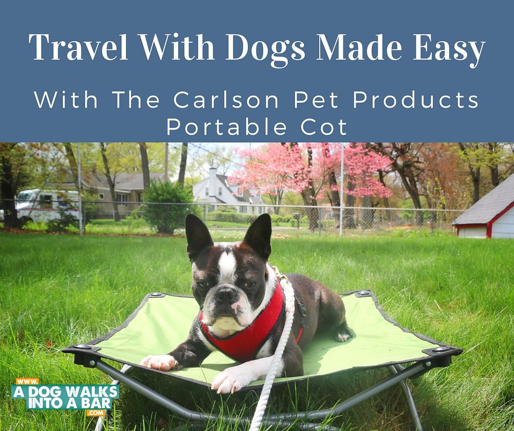 Yoda lounging on his Portable Pet Cot from Carlson Pet Products