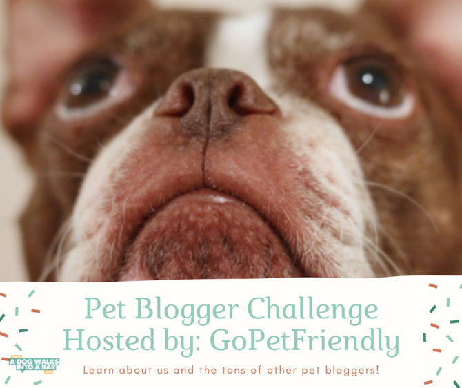 The GoPetFriendly Pet Blogger Challenge