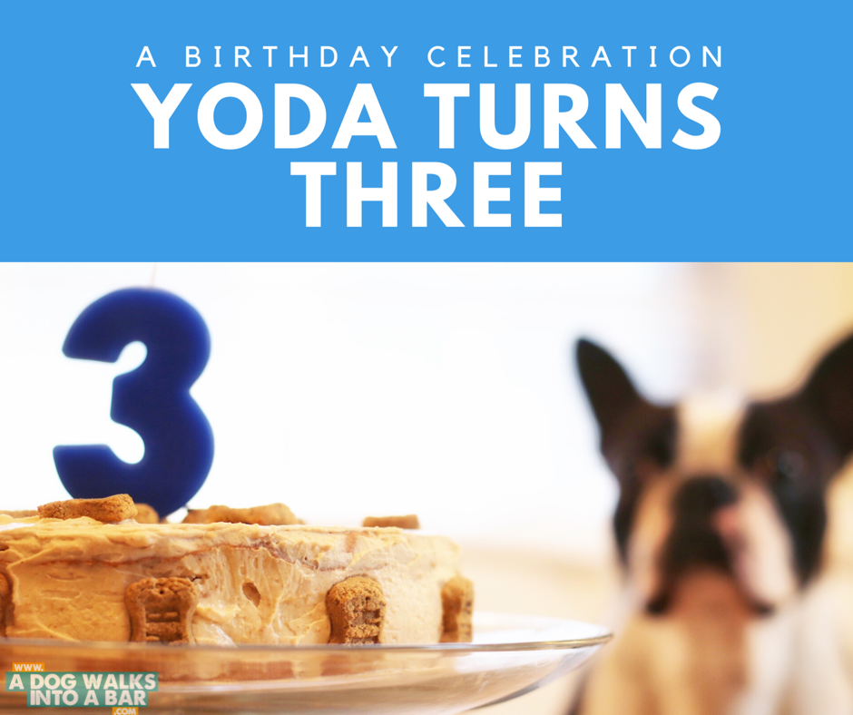 Yoda's birthday celebration included a home made dog birthday cake