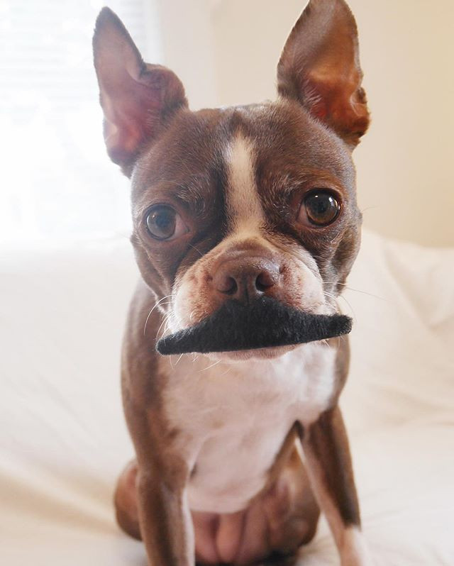 Yes, it's a mustache and she's a girl, but close enough