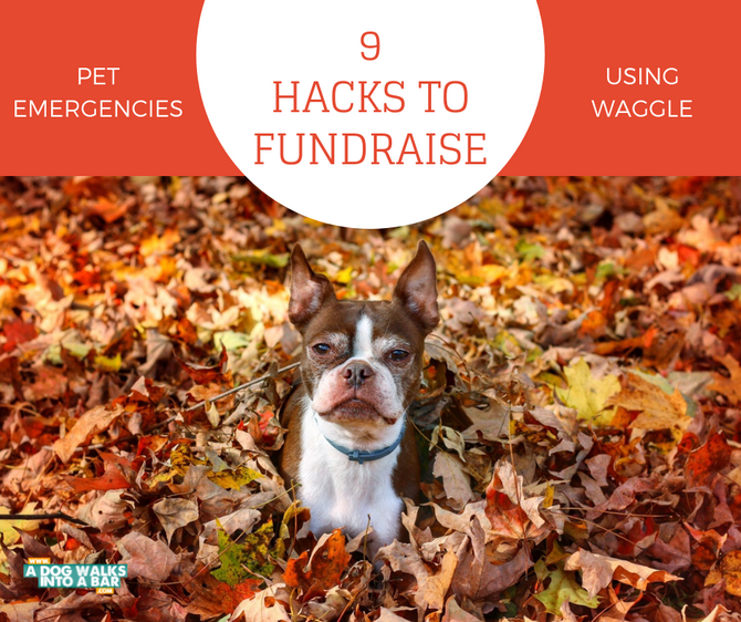 How to Raise Money for Pet Emergencies Using Waggle