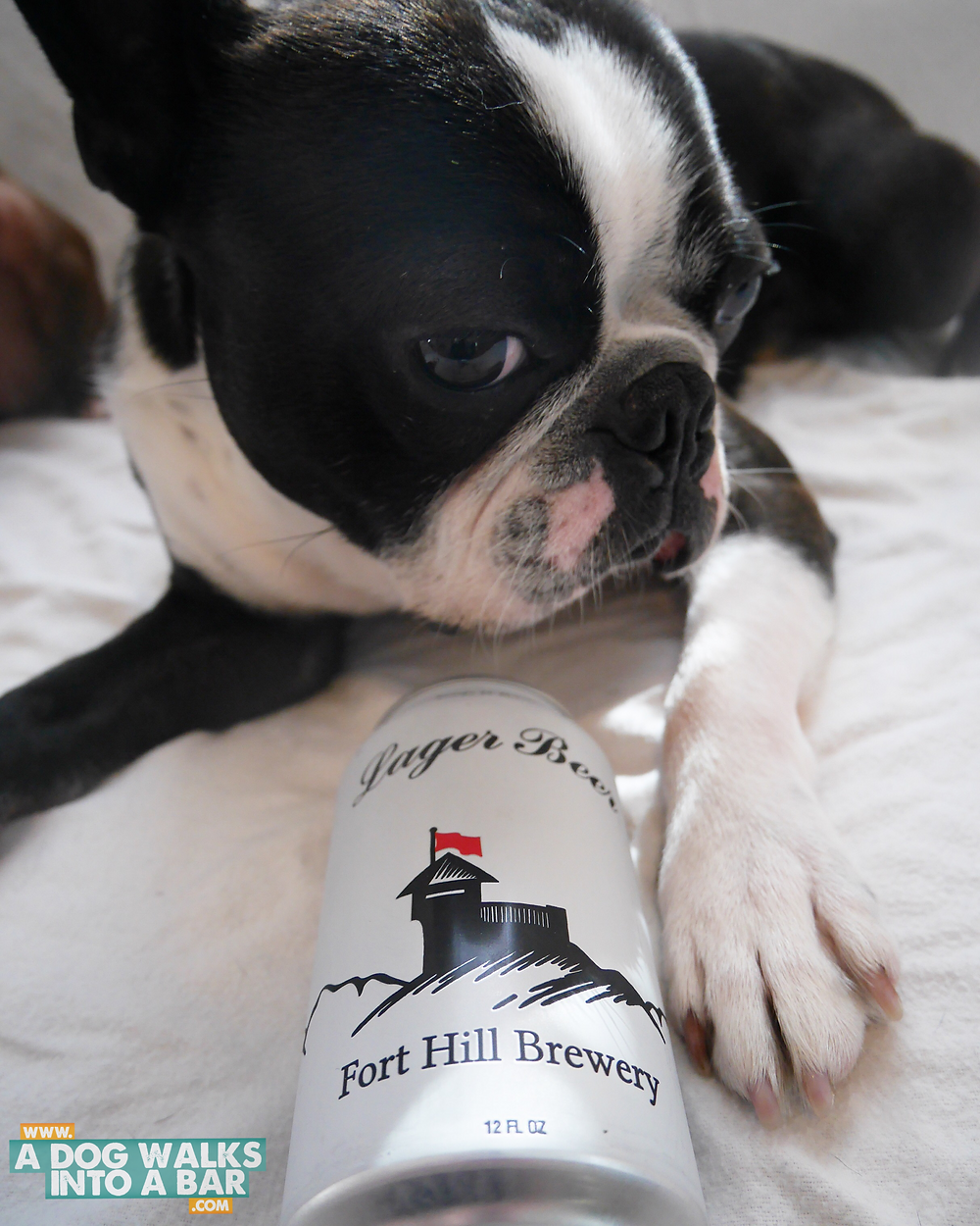 Yoda snuggling with Fort Hill Brewery Beer