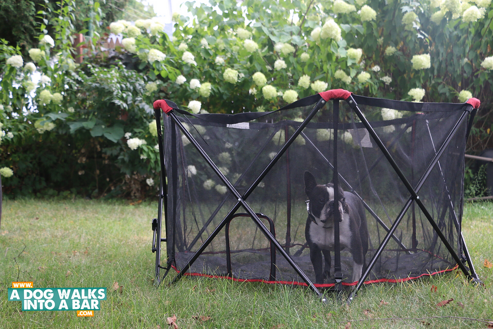 yard work with dogs is easier with the portable pet pen by carlson pet products