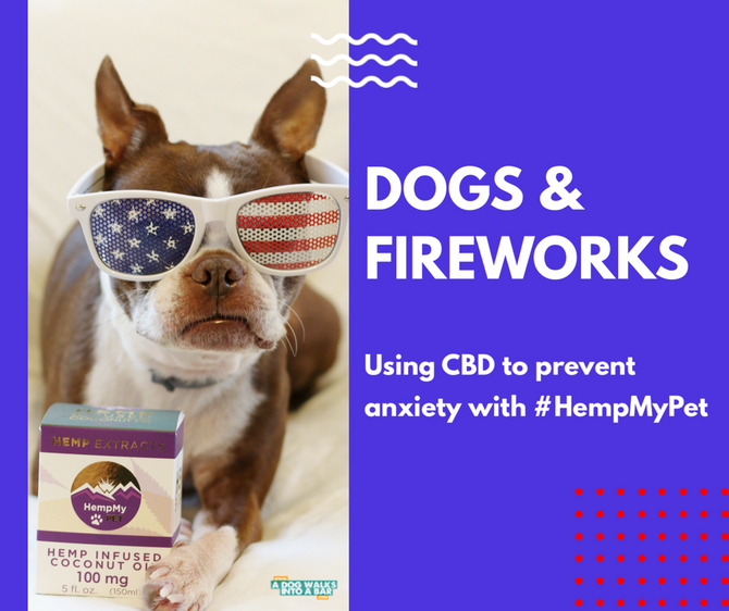 Dogs & Fireworks: Using CBD to Prevent Anxiety