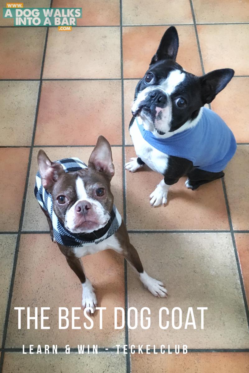 bean and yoda in their teckelklub fuzzy fleece coats