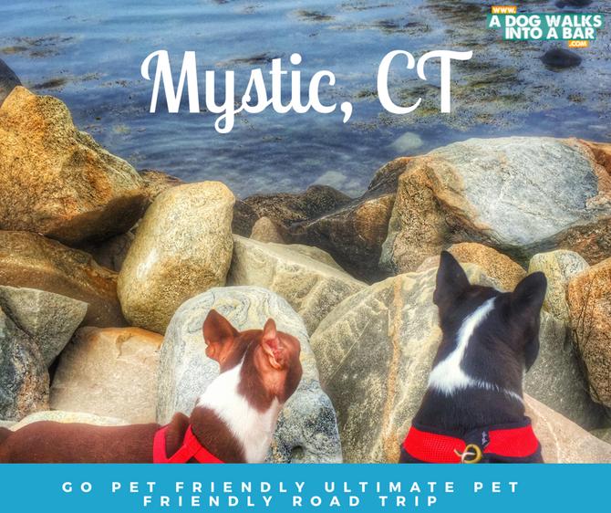 Dog Friendly Travel, Free Slush Puppy Recipe & Giveaway