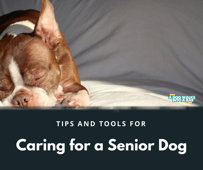 Caring for a Senior Dog, Tips & Tools