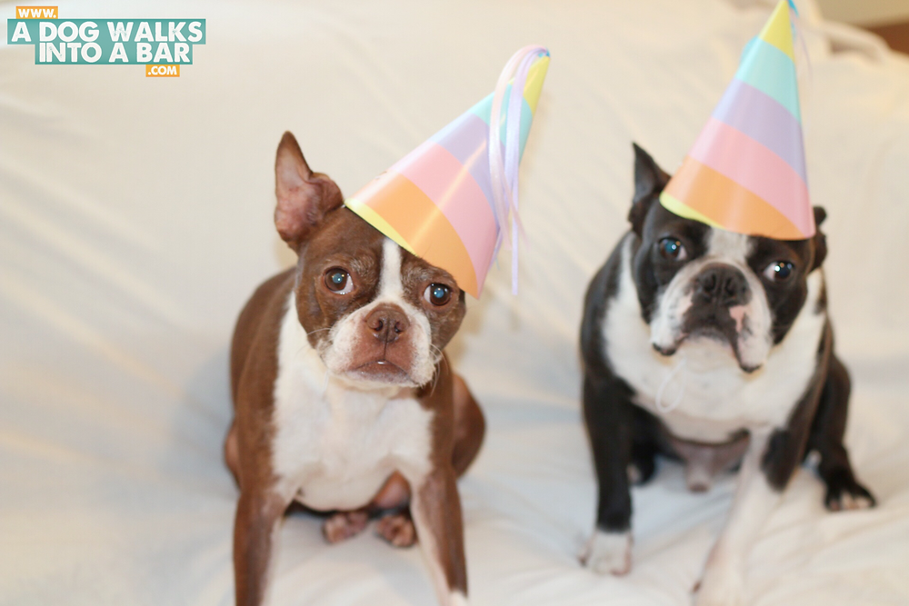 getting ready for a dog birthday party means party hats