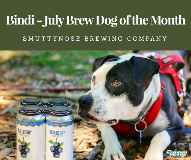 July Brew Dog of the Month - Bindi from Smuttynose Brewing Company