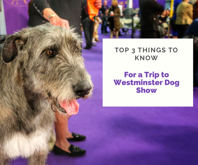 The Three Things you Should Know for Planning a Trip to the Westminster Dog Show