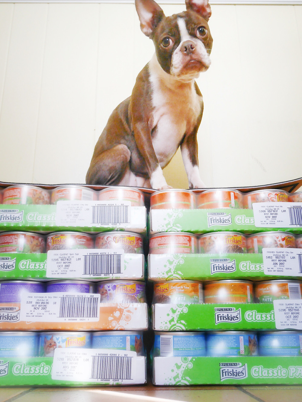 Bean with Friskees Cat Food for Donation from BlogPaws