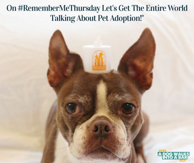 Remember Me Thursday: Helping to Shine A Light for Animal Rescue