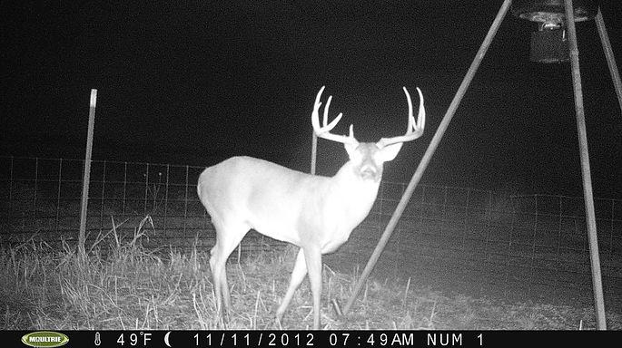 Trail Camera, whitetail, deer, buck, hunting, ridgeback creek