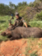 Free hog hunt