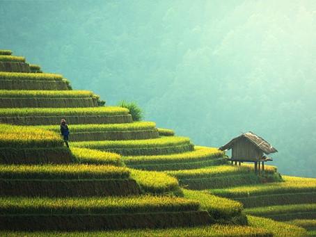 農業のIoT化 – ベトナム –