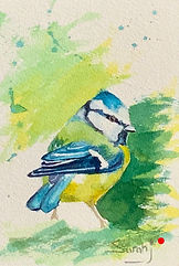 Blue Tit _ Watercolour _ Paper _ 18 x 25 _ SOLD